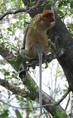 monkey-1813