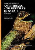 amphibians-&-reptiles-in-sabah