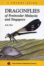 dragonflies-penimsular-malaysia-&-singapore