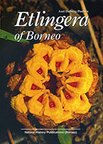 etlingera-of-borneo