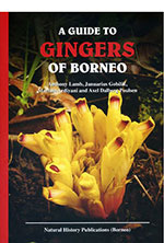 guide-gingers-of-borneo