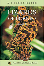 lizards-of-borneo