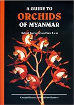 orchids-of-myanmar